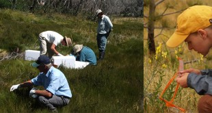 Environmental science Careers