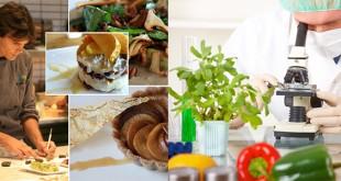 Food Technology Career