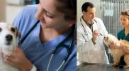 Career in Veterinary
